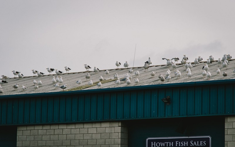 Howth Fish Sales